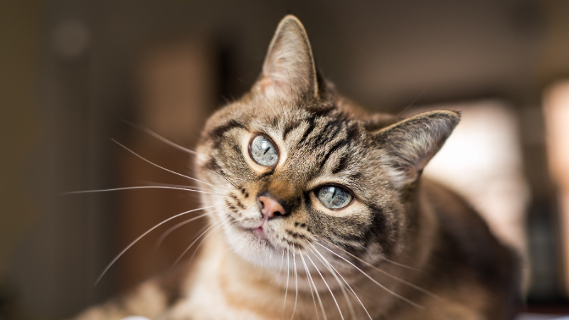 A cat looking at the camera Description automatically generated with medium confidence
