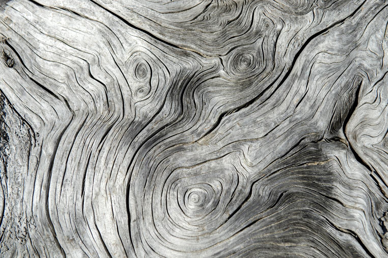 Full frame shot of tree rings on a dry tree trunk