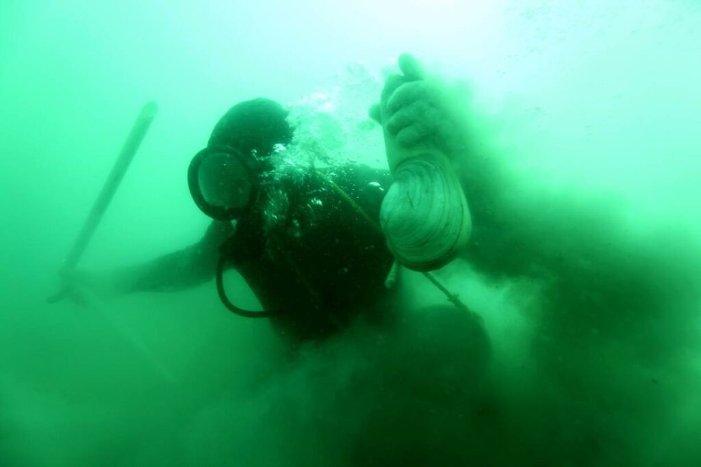 Một thợ lặn thu hoạch geoduck ở Vịnh California, Mexico, vào năm 2012.