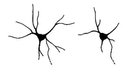 Mutations in the neurochondrin gene linked to epilepsy