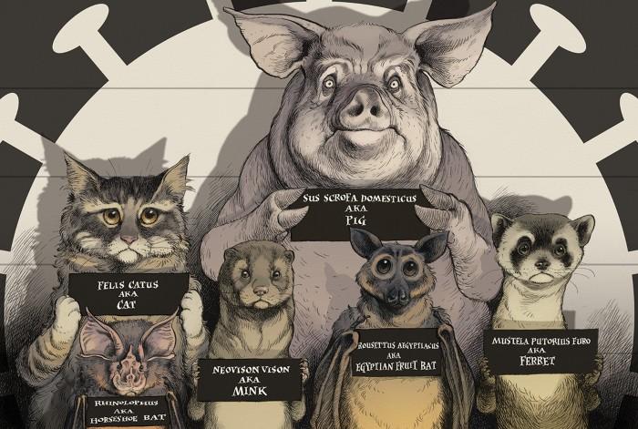 Phim hoạt hình mèo, dơi, chồn, chồn và lợn cầm thẻ tên như thể trong đội hình cảnh sát với đèn chiếu hình vi-rút trên người